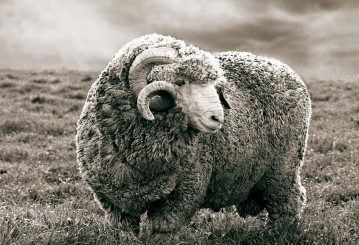 Merino Wool Clothing